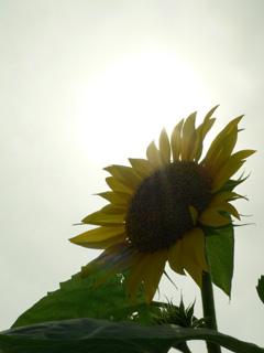 太陽でたー